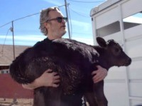 Watch: Joaquin Phoenix Rescues Cow and Calf from L.A. Slaughter House