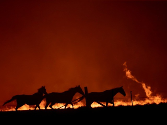 CANBERRA, AUSTRALIA - FEBRUARY 01: Horses panic as a spot fire runs through the property of Lawrence and Clair Cowie on February 01, 2020 near Canberra, Australia. The couple stayed to defend their home, with the spot fire destroying part of the property. Chief Minister Andrew Barr declared a State …