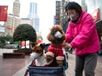 Pet Dog in Hong Kong Tests Positive for Coronavirus