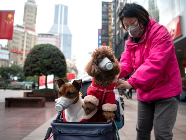 A woman pushes a stroller with two dogs wearing masks along a street in Shanghai on February 19, 2020. - The death toll from China's new coronavirus epidemic jumped past 2,000 on February 19 after 136 more people died, with the number of new cases falling for a second straight …