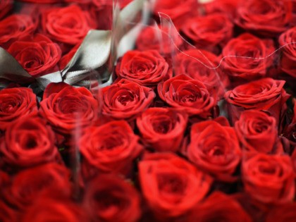 A close-up view of flowers at Johnston and Scott flower merchants as flowers are prepared ready for delivery to florists in time for Valentines Day, on February 13, 2015 in Glasgow, Scotland. With Valentines Day approaching florists across the country are preparing for the last minute rush as people go …