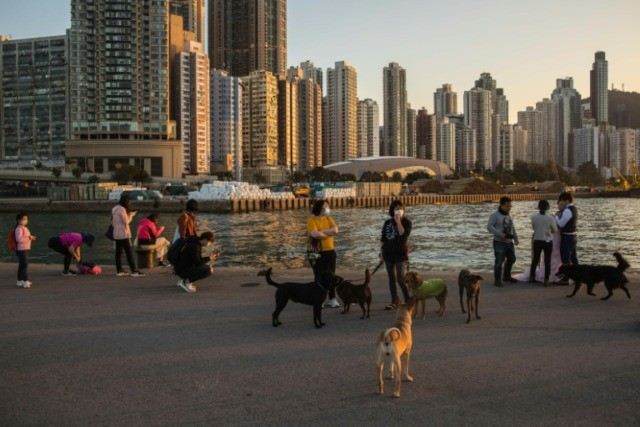 While there is no evidence animals such as dogs and cats can catch the virus or transmit it to humans, Hong Kong authorities say pets of infected people should be quarantined for 14 days