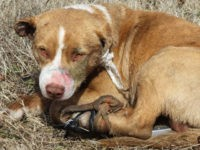 dog found with legs strapped