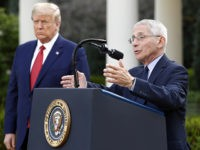 White House Denies Fight Between Donald Trump and Anthony Fauci