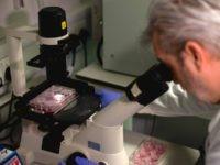 Coronavirus microscope (Tolga Akmen / AFP / Getty)
