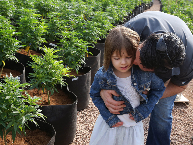 In this Feb. 7, 2014 file photo, Matt Figi hugs his daughter Charlotte, then 7, inside a greenhouse west of Colorado Springs where the strain of medical marijuana known as Charlotte's Web was grown. The strain was named for the girl early in her treatment for Dravet syndrome, a crippling …