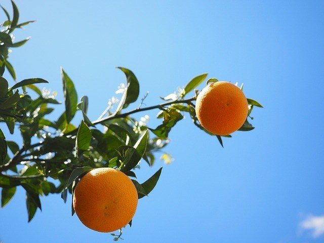 Chinese Citrus Production