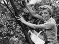 Return of the Land Army: 26,000+ Britons Sign up to Pick Fruit and Vegetables