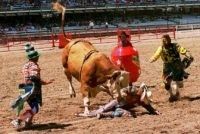 In this July, 1997 file photo, Dwayne Hargo, left, Rick Chatman, right, and Quail Dobbs, in the barrel, try to divert the bull's attention away from a fallen cowboy at the Frontier Days rodeo in Cheyenne, Wyo. Cheyenne Frontier Days has been canceled for the first time in its 124-year …