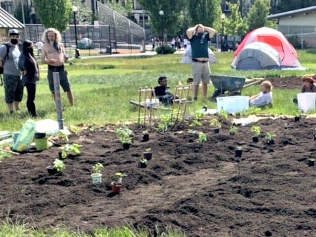 CHAZ guerilla gardening