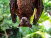 bat via rigel on unsplash