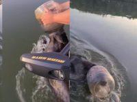 bear is rescued