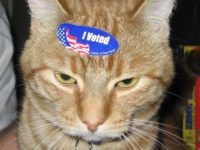 Dead 'Cody' the Cat Receives Voter Registration Form