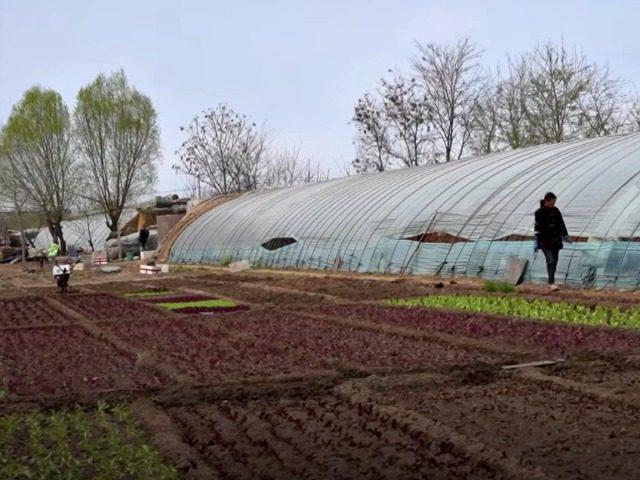 Chinese farmers see livelihoods threatened by coronavirus pandemic and related economic slump