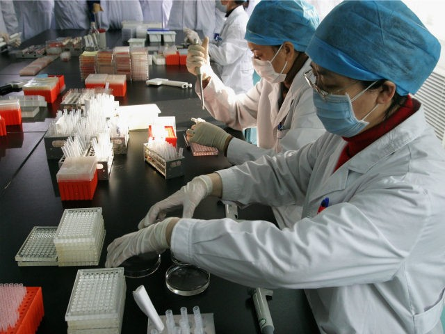 Health workers take samples of chicken blood in a laboratory February 6, 2004, in Beijing, China. Chinese authorities have slaughtered 1.215 million chickens, ducks and geese as 56,000 poultry have been infected with bird flu, but no cases of human infection have been reported in China so far. (Photo by …