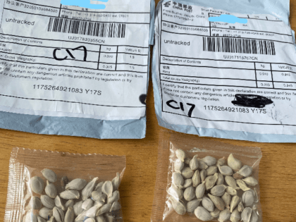 We have received reports of people receiving seeds from China that they did not order. If you receive them - don't plant them. Report to @USDA_APHIS at https://aphis.usda.gov/aphis/ourfocus/planthealth/import-information/sa_sitc/ct_antismuggling