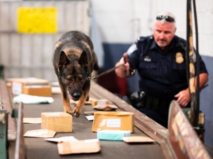 An officer from the Customs and Border Protection, Trade and Cargo Division works with a dog to check parcels at John F. Kennedy Airport's US Postal Service facility on June 24, 2019 in New York. - In a windowless hangar at New York's JFK airport, dozens of law enforcement officers …
