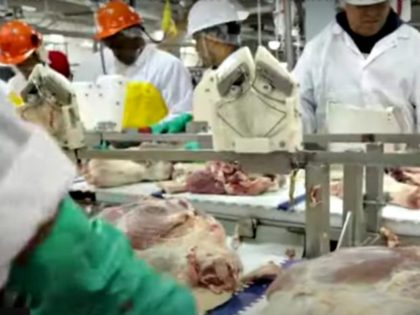 Meatpacking Production Line, Human