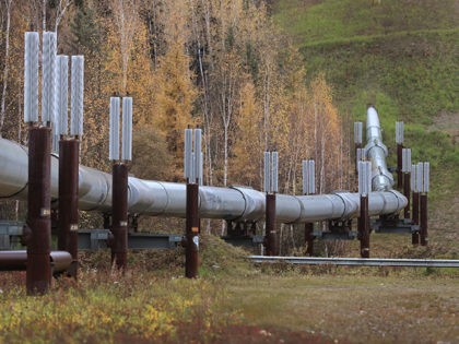 FAIRBANKS, ALASKA - SEPTEMBER 17: A part of the Trans Alaska Pipeline System is seen on September 17, 2019 in Fairbanks, Alaska. The 800-mile-long pipeline carries oil from Prudhoe Bay to Valdez. After an attack on a petroleum processing facility in Saudi Arabia, U.S. President Donald Trump said that the …