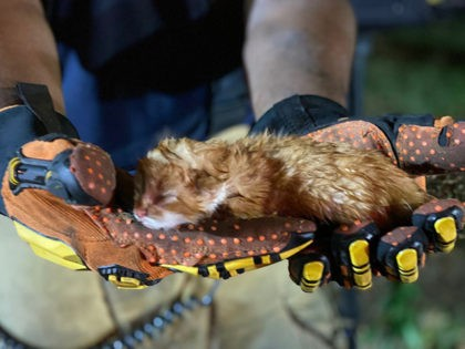 Firefighters rescue a kitten from a burning house