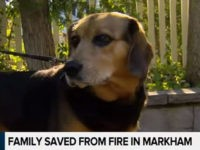 VIDEO: Dog Saves Canadian Family from House Fire