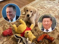 Mike Pompeo Breaks the Internet with Photo of His Dog and Winnie the Pooh Chew Toy