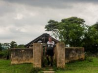Former president of the Commercial Farmers Union (CFU) Deon Theron inspects a disused cattle dip on Eden farm, on November 27, 2017 in Beatrice, Zimbabwe, where he ran a successful dairy before being forced off the property during the Robert Mugabe lead land reform programme. Standing outside the gates of …