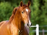 Texas Police Search for Serial Horse Killer