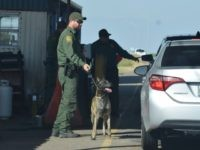 EXCLUSIVE: Border Patrol to Shut Down All Sector Checkpoints