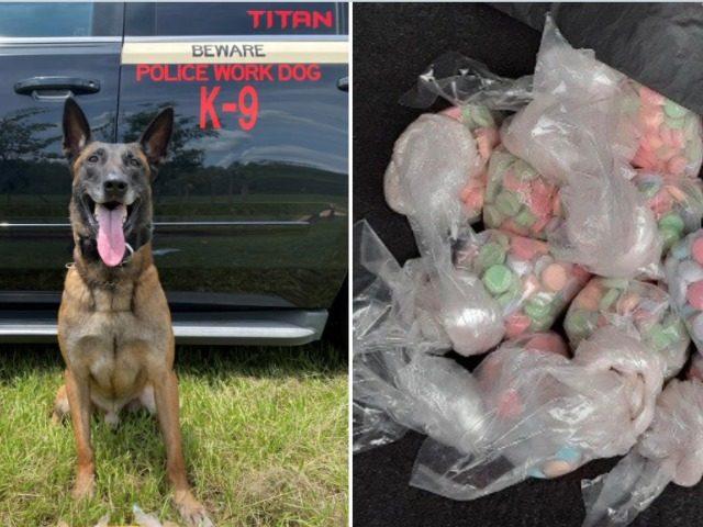 K-9 Dog Sniffs Out Ecstasy Pills