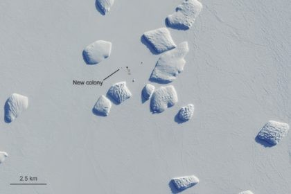 Markings points to a patch of penguin guano on an image captured by the Copernicus Sentinel-2 satellite mission Aug. 26, 2019. British scientists say they've confirmed that there are more emperor penguin colonies in Antarctica than previously thought. Researchers at the British Antarctic Survey used satellite images to spot tell-tale …
