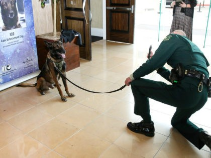Ice with his handler Patrol Capt. Christopher Magallon during an event honoring the USDA Forest Service law enforcement dog. Photo USDA Forest Service