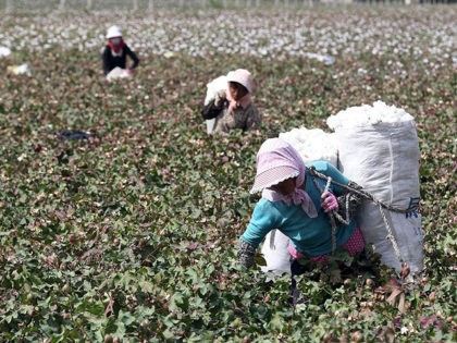 This photo taken on September 20, 2015 shows Chinese farmers picking cotton in the fields during the harvest season in Hami, in northwest China's Xinjiang region. Chinese Premier Li Keqiang urged reforms on September 20 of inefficient state-owned enterprises as his government tries to restore confidence in its slowing economy, …