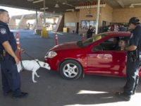 CBP K-9 searches for drugs at a Texas border crossing. (Photo: U.S. Customs and Border Protection)
