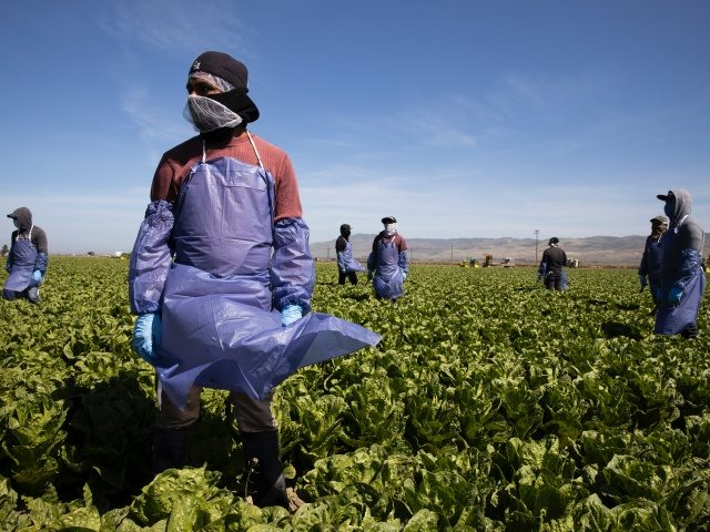 SALINAS, CA - April 27, 2020: <> on April 27, 2020 in Salinas, California. (Photo by Brent Stirton/Getty Images)
