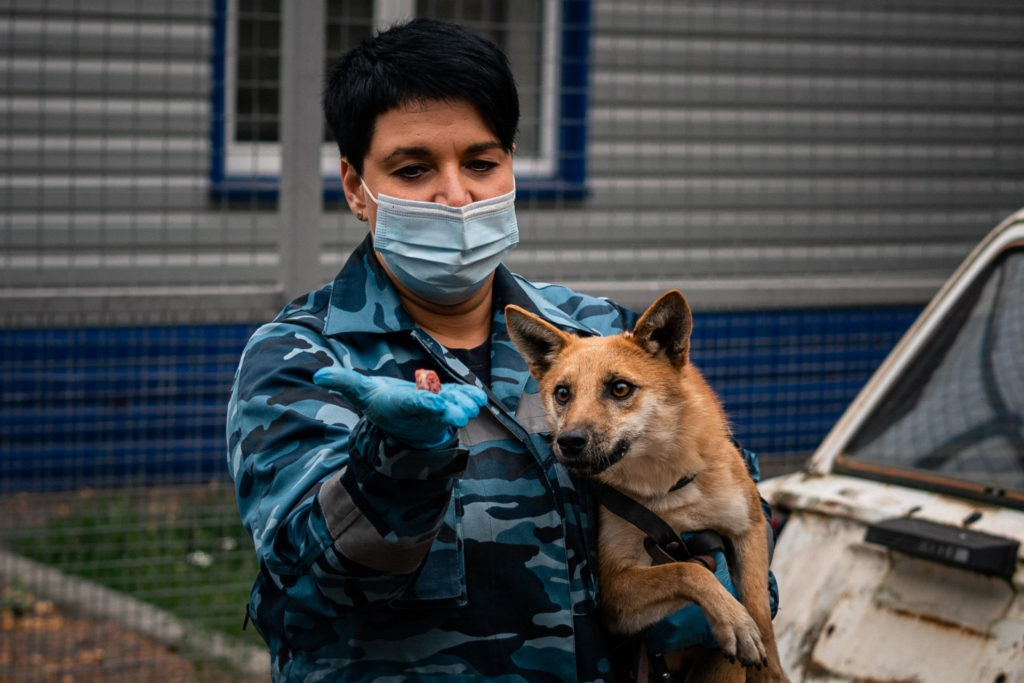 A trainer from the canine service of Russias Aeroflot carrier trains a sniffer dog to detect coronavirus in biomaterial from infected people near Moscow's Sheremetyevo Airport on October 9, 2020. - Russia registered a record daily number of new coronavirus infections on October 9, surpassing its previous high from May. Officials reported 12,126 new infections, edging above the previous high of 11,656 on May 11 and bringing the total number of confirmed cases to 1,272,238 -- the fourth highest in the world. (Photo by Dimitar DILKOFF / AFP) (Photo by DIMITAR DILKOFF/AFP via Getty Images)