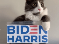 14 Days: Joe Biden Campaign Posts Cat Videos