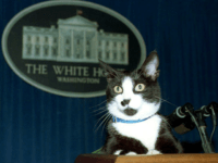 Joe Biden and Wife to Move Cat, Two Dogs into White House