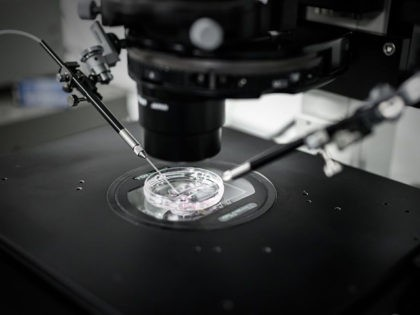 A personnel (unseen) of the laboratory of reproductive biology CECOS, the medically assisted procreation (PMA) unit of Tenon Hospital (Hopital Tenon AP - HP), performs intra cytoplasmic sperm injection process (ICSI) in Paris on September 24, 2019. - The French parliament debated a draft law on September 24 to extend …