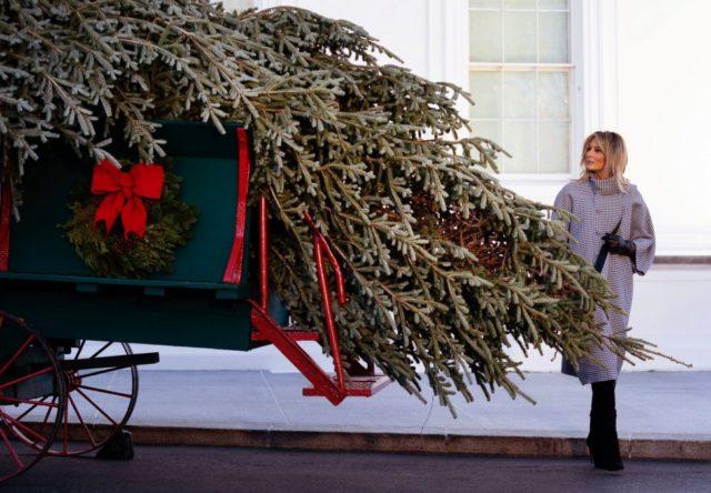 White House presses on with Christmas tree ceremony despite coronavirus warnings