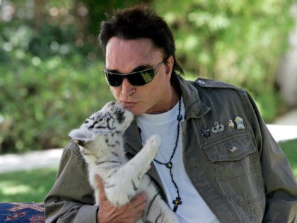 Roy Horn, of the illusionist team of Siegfried & Roy, kisses a six-week-old white-striped tiger cub at his Las Vegas home Thursday, June 12, 2008. The pair are welcoming five new tiger cubs to their exotic habitat on the Las Vegas Strip. Fischbacher said Thursday that working with the tigers …
