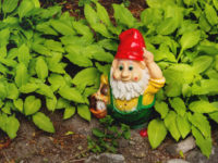 Garden gnome with basket full of mushrooms. Colorful sculpture in leaves of Hosta plant. Summer sunset in garden. - stock photo Garden gnome with basket full of mushrooms. Colorful sculpture in leaves of Hosta plant. Summer sunset in garden.