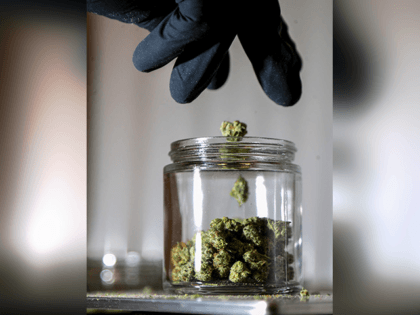 In this March 22, 2019 file photo, shows marijuana buds being sorted into a prescription jar at Compassionate Care Foundation's medical marijuana dispensary in Egg Harbor Township, N.J. Voters in four states could embrace broad legal marijuana sales on Election Day, setting the stage for a watershed year for the …