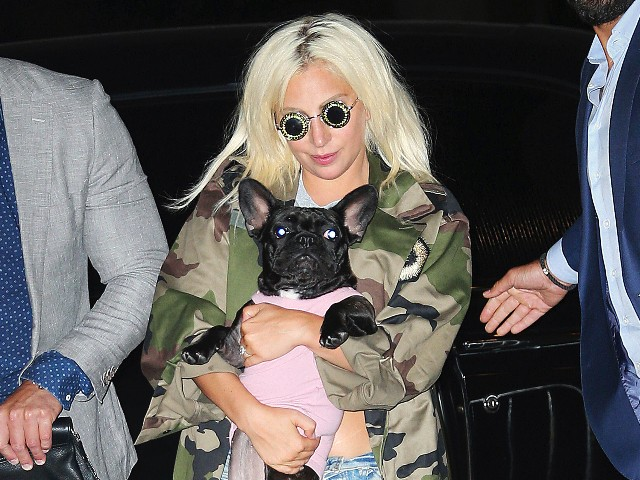 Lady Gagas Dogs Recovered Safely After Being Stolen in Armed Robbery