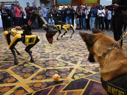 In this file photo, Kedy the Security K9 meets robotic digidogs called Spot and built by Boston Dynamics during the Amazon Re:MARS conference on robotics and artificial intelligence at the Aria Hotel in Las Vegas, Nevada on June 4, 2019. (Mark Ralston/AFP via Getty Images)
