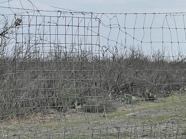 Fence damage caused by migrants marching through ranches in Kinney County, Texas. (Photo: Kinney County Sheriff's Office)