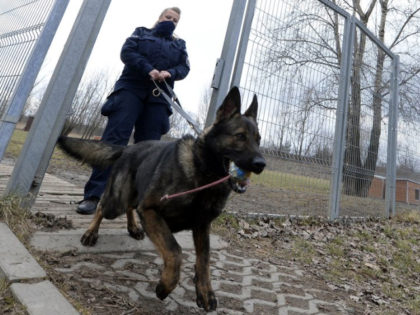Police officer Katarzyna Matuszewska after training with patrol dog Ort, in Warsaw, Poland, on Friday, March 19, 2021. When they age, the dogs and horses that serve in Poland's police, Border Guard and other services cannot always count on a rewarding existence. Responding to calls from concerned servicemen, the Interior …