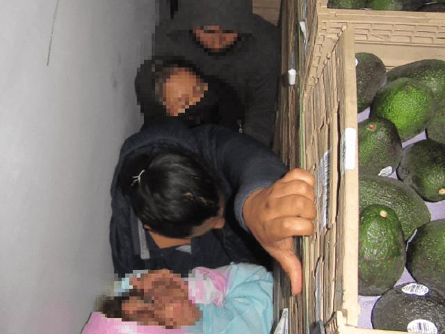 Falfurrias Border Patrol agents find 42 migrants hiding in a tractor-trailer loaded with avocados. (Photo: U.S. Border Patrol/Rio Grande Valley Sector)