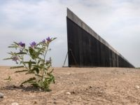 Photos: Border Wall Materials Neglected After Biden Halts Construction