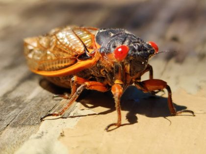 A White House press charter plane set to travel to Europe was grounded Tuesday evening after cicadas caused mechanical issues with the engine.